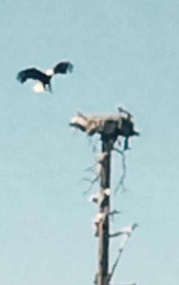 Community Photo: FMC Park Eagle