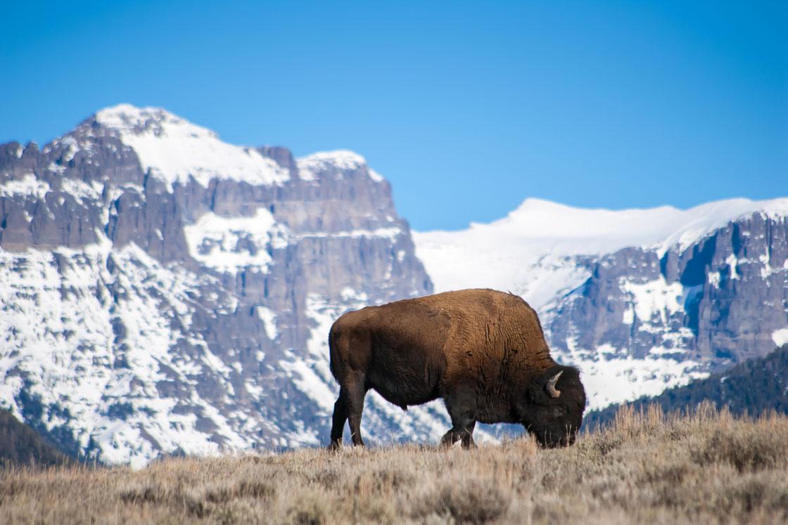 Wyoming Snowpack 70-75 Percent of Normal