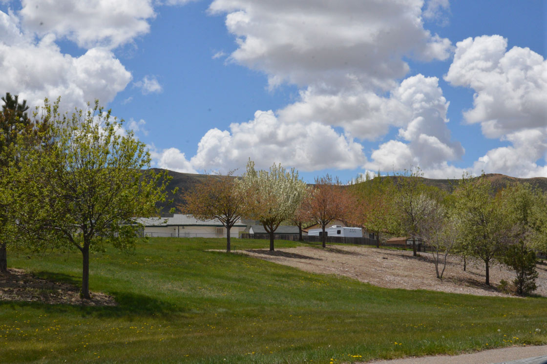 Celebrate Arbor Day at Indian Hills Park
