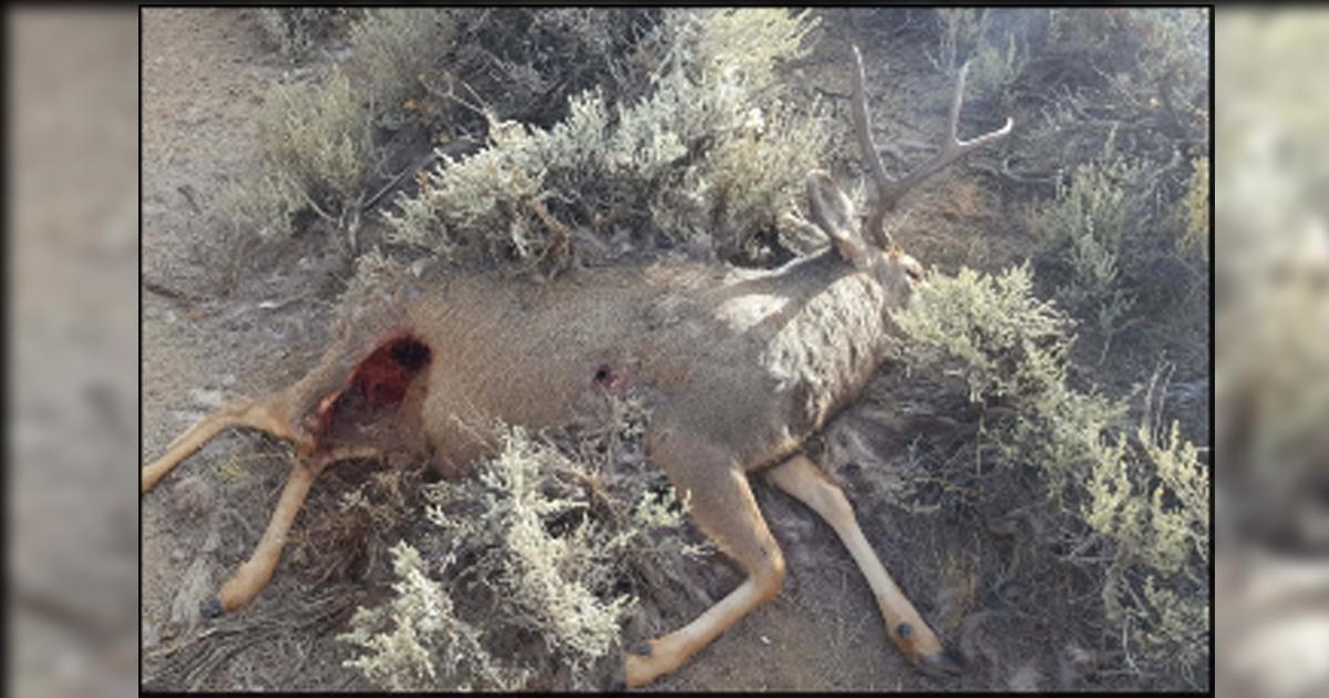 Two Dead Bucks on Winter Range; Info Sought on Poaching