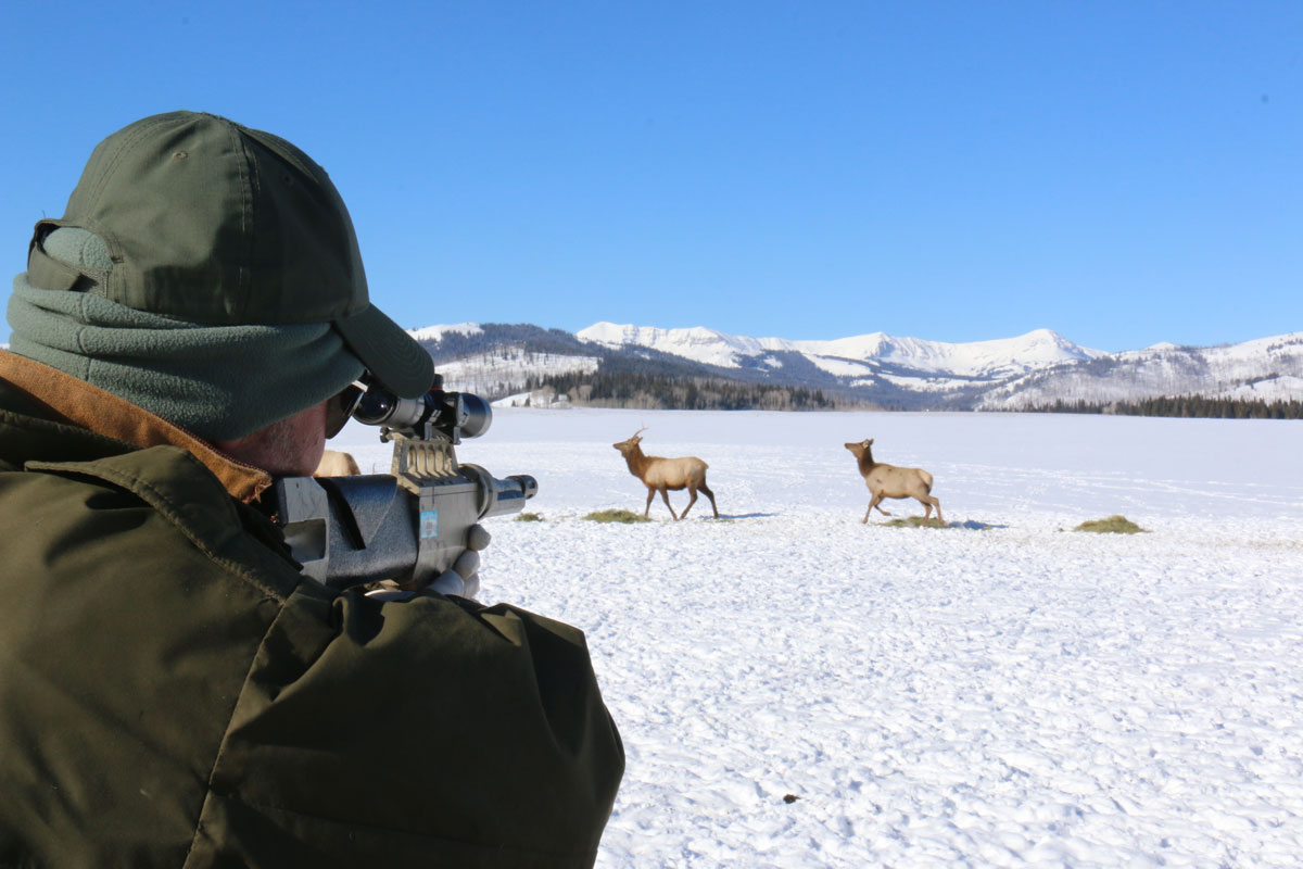 Elk Ecology Research Continues