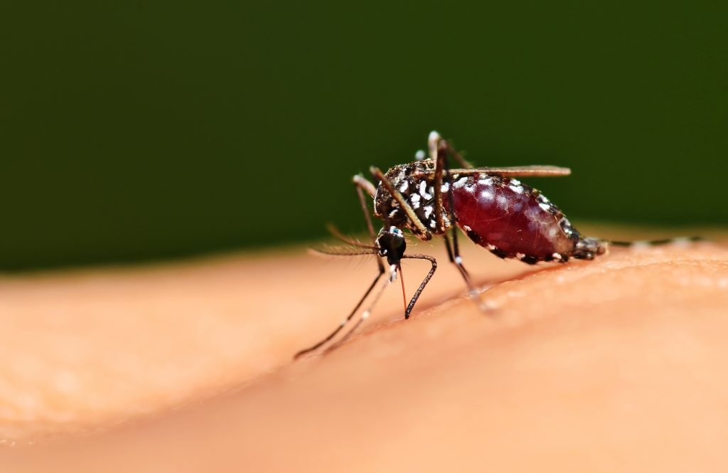 How to Avoid Mosquito and Tick Spread Diseases
