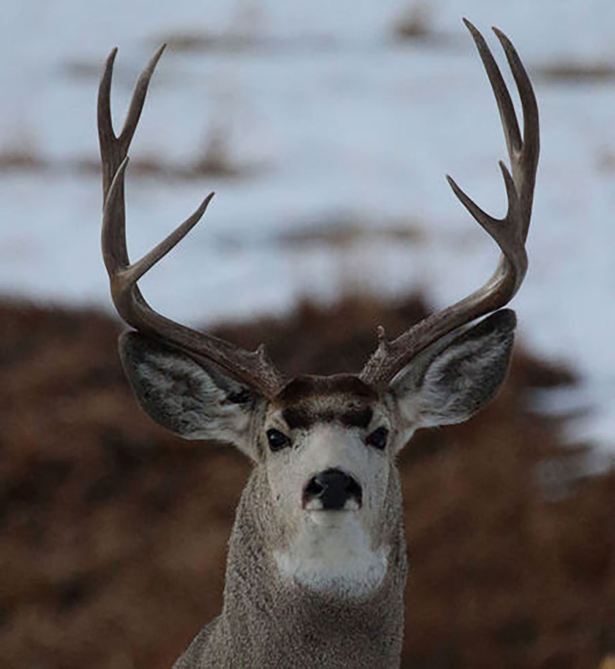 What You Can Expect From The Fall Hunting Forecast