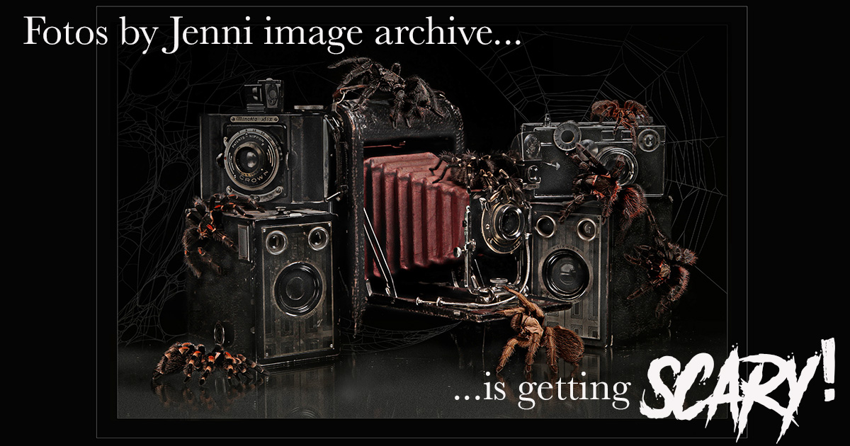Secure Your Photo Archive From Fotos by Jenni Before It's Too Late!