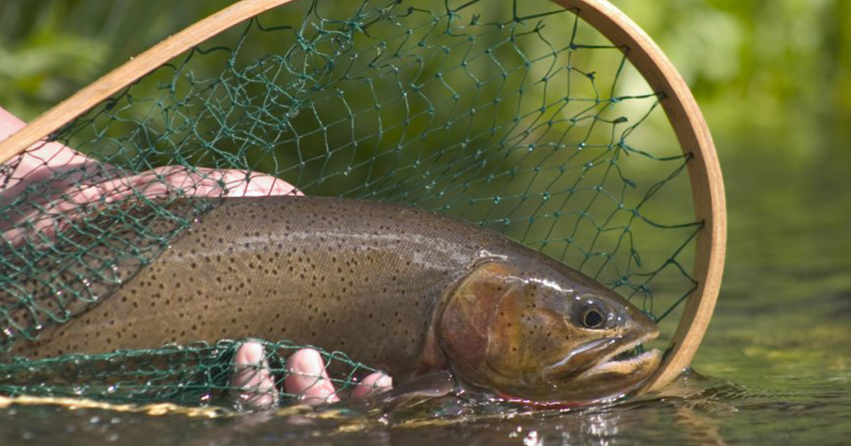 Anglers Cautioned Warm Water Impacts Local Fisheries
