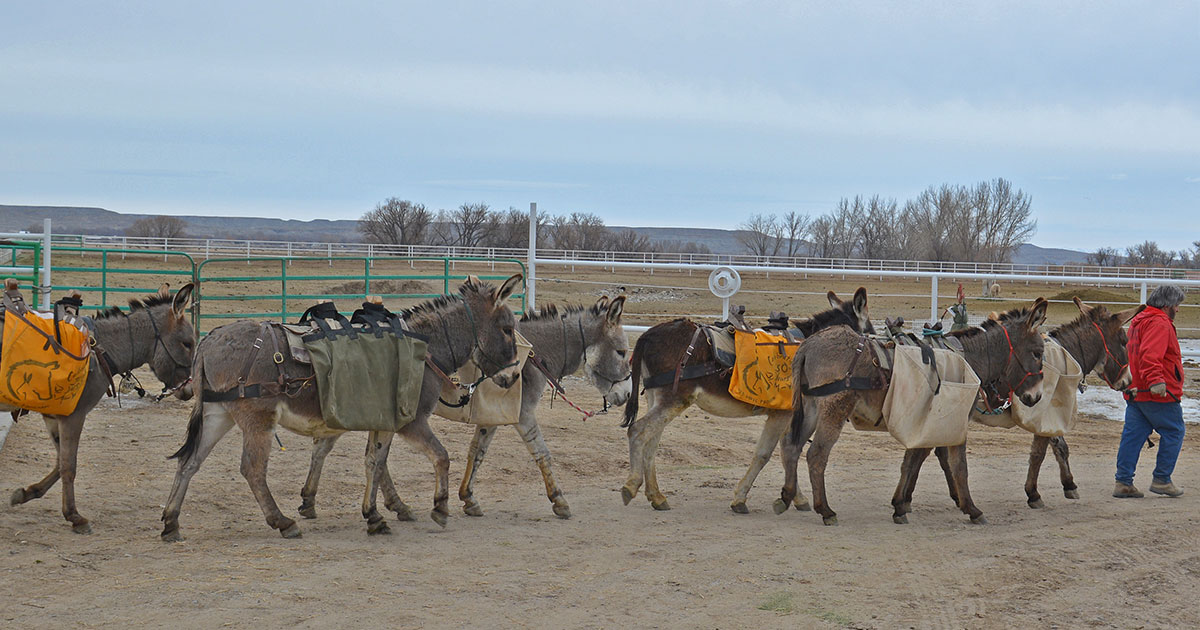 Adopt a Wild Horse or Burro at the Wyoming Honor Farm