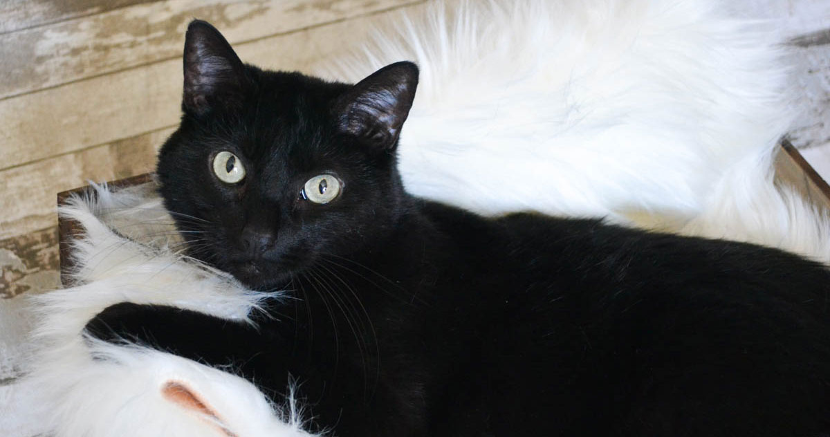 Adorable & Adoptable–Pets of the Week: Issa, Ivy, & Malia