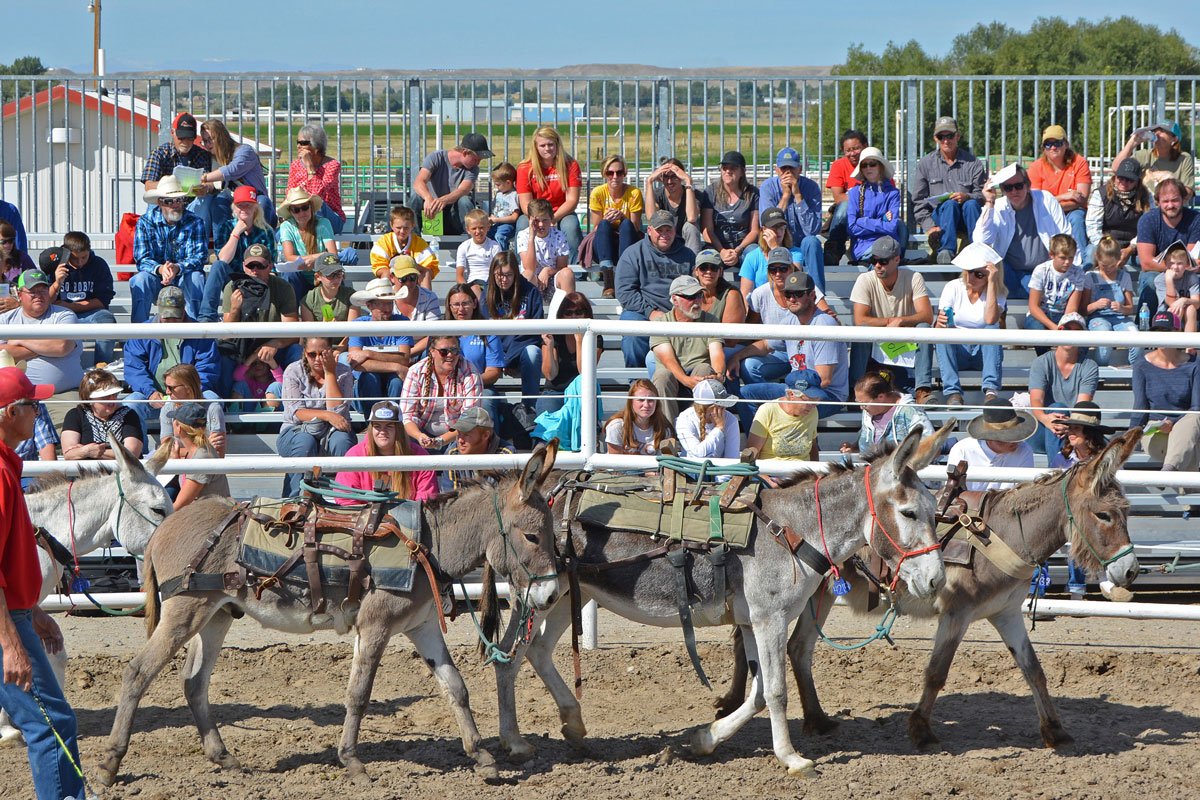 37 Wild Horses and Burros Find Homes at Honor Farm Adoption