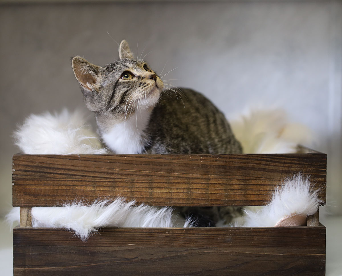 Adorable Adoptables: Nala, Cinder, & Malakai