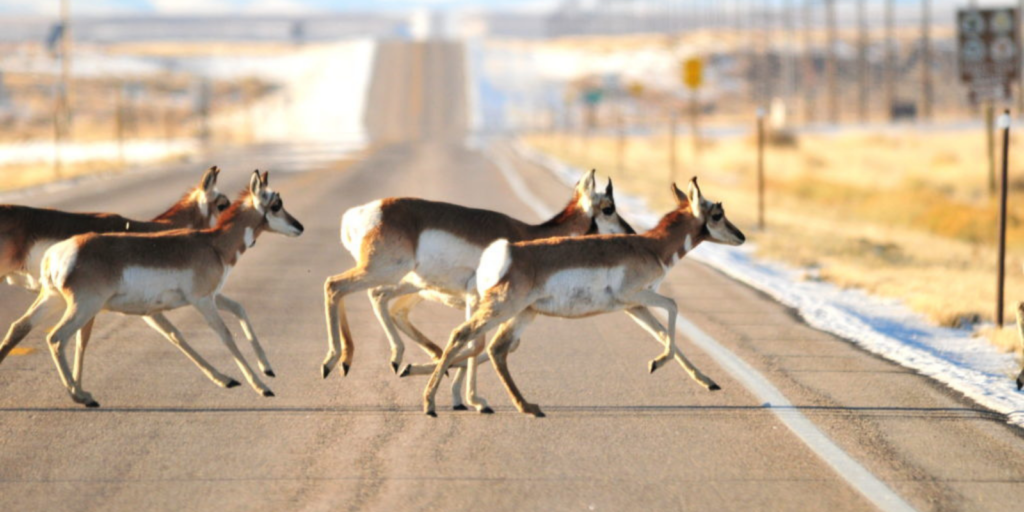 WYDOT Receives $14.5 Million Federal Grant for Wildlife Crossing Project in Southwest Wyoming