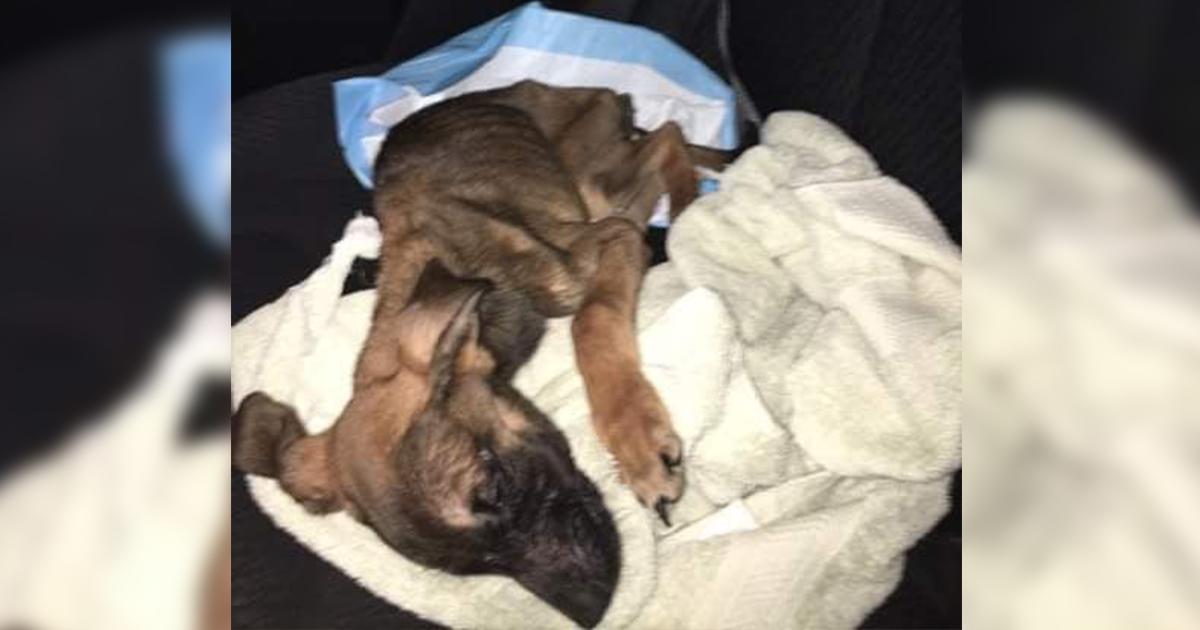 Woman Receives Maximum Sentence in Animal Cruelty Case