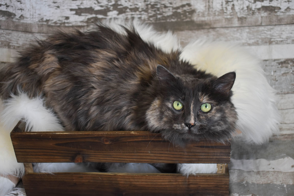 Adorable & Adoptable–Pets of the Week: Ivy, Kiki, & Angel