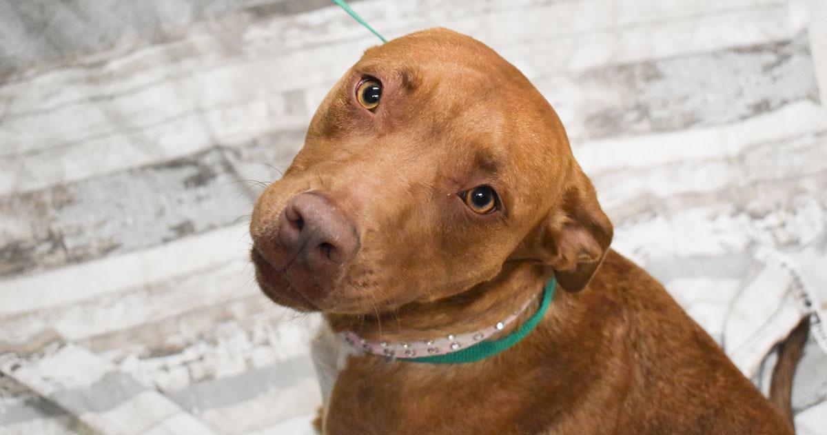 Adorable & Adoptable–Pets of the Week: Malibu, Brandy, & Baby