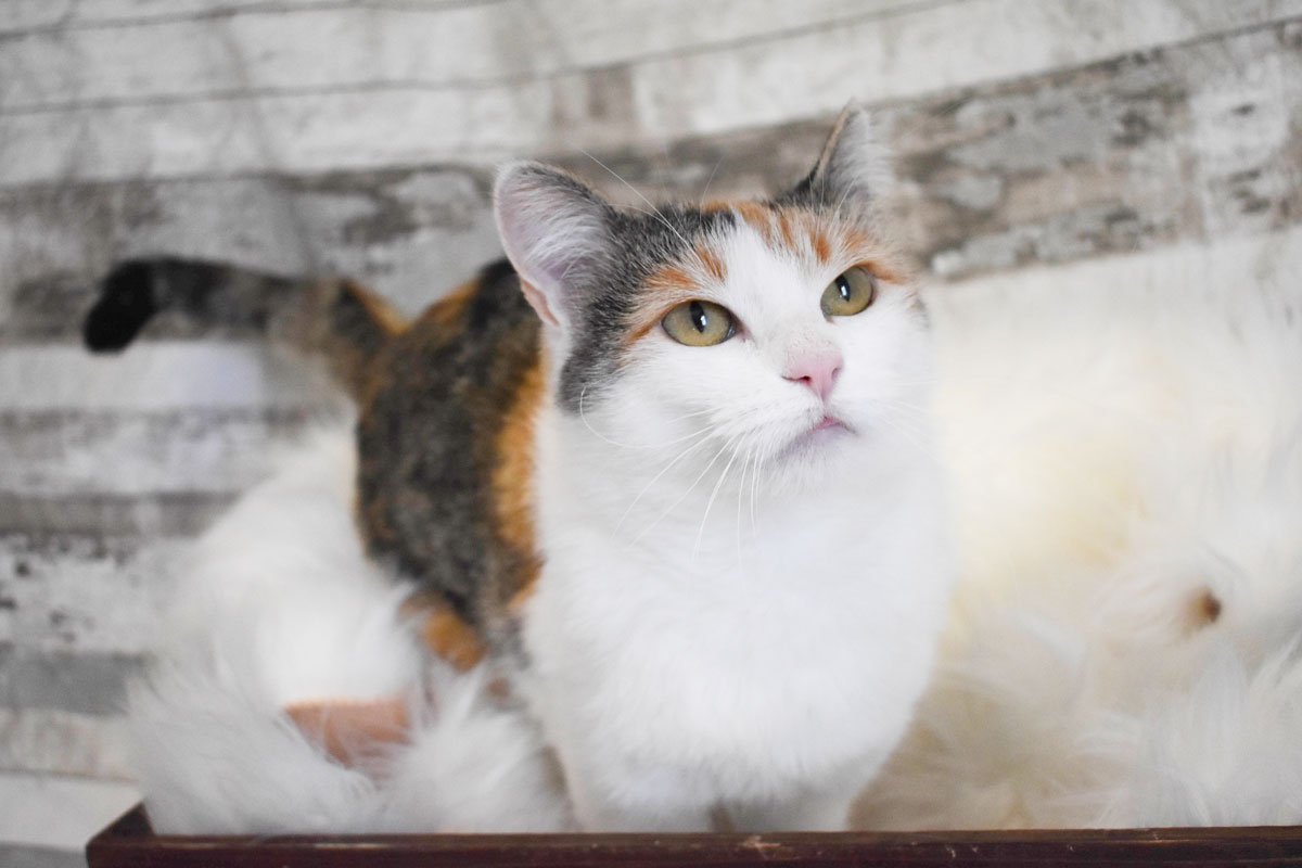 Adorable & Adoptable–Pets of the Week: Luna, Clementine, & Sol