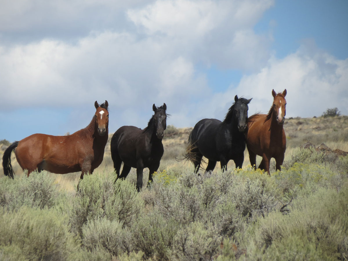 April and May Wild Horse Adoptions Postponed in Wyoming