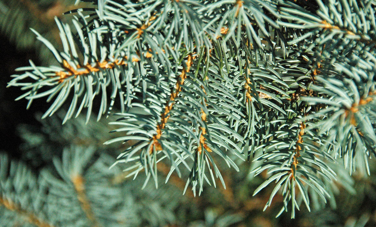 City of Green River Looks to Plant Trees for Beautification