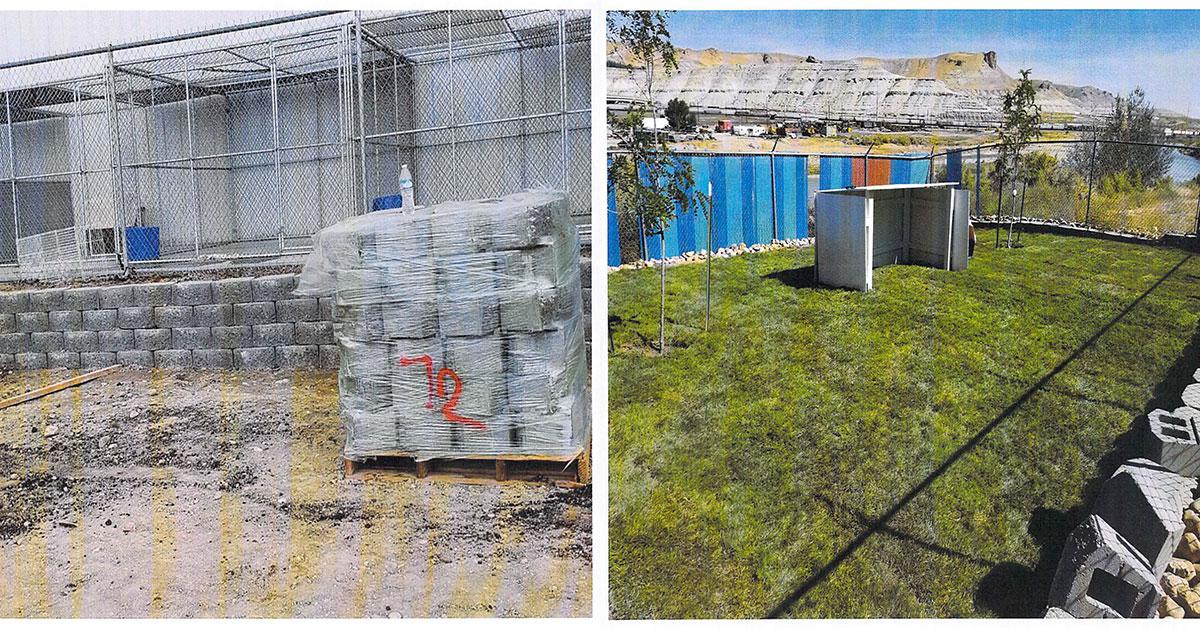 Animal Control Improves Backyard Area