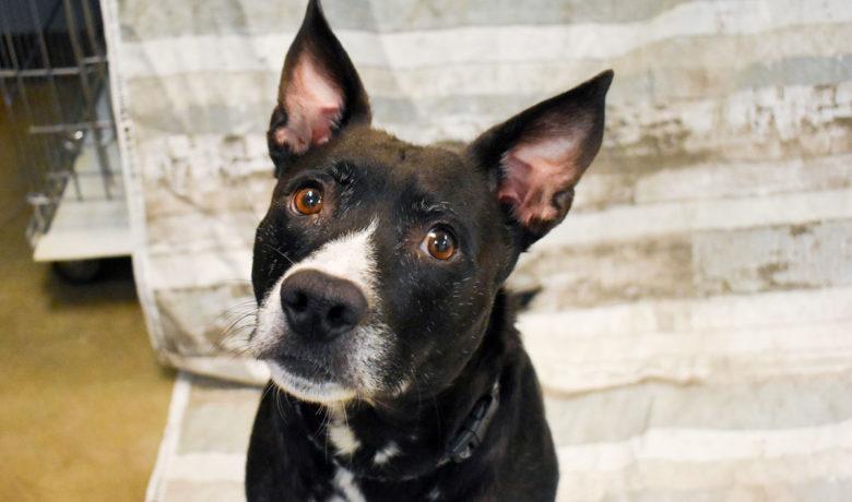 Adorable & Adoptable–Pets of the Week: Willie, Keisha, & Paul