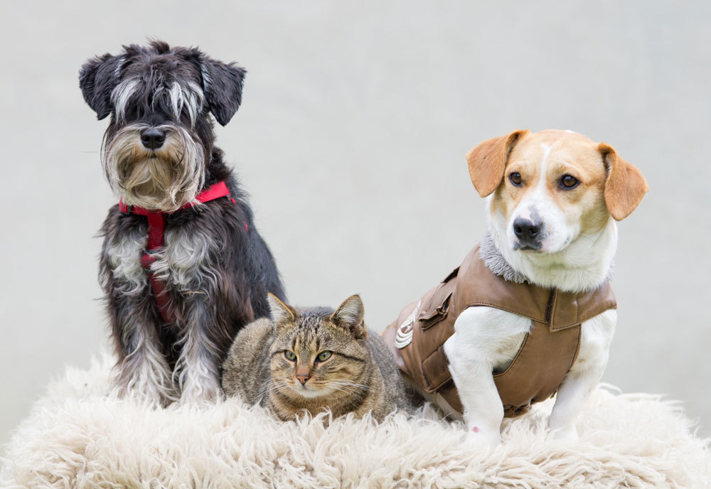 Sweetwater County Animal Response Team will be holding a 'Build a Bucket' event to create 72 hour emergency kits for pets