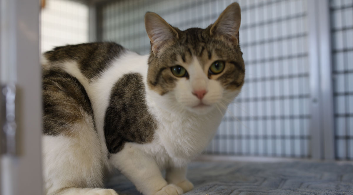 Adorable & Adoptable–Pets of the Week: Sassy, Vinny, & Lynx