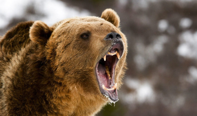 Be Bear Aware This Fall When Recreating