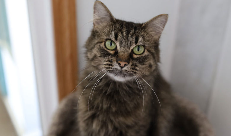 Adorable & Adoptable–Pets of the Week: Freedom, Sassy, & Al