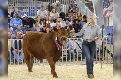 4-H Livestock Auction a Big Success Despite the Cancelation of Wyoming's Big Show