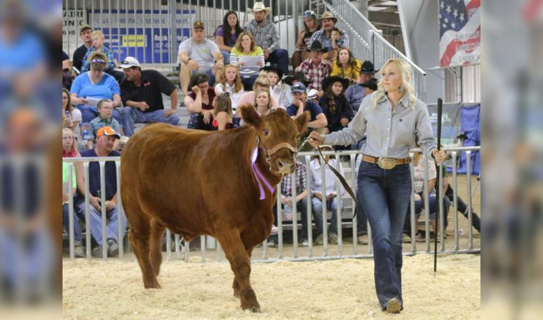 FFA, 4-H Participants Prepare for Wyoming's Big Show