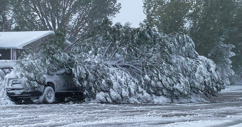 Branches, Ice, Wind: An Early Fall Snow Day in Photos