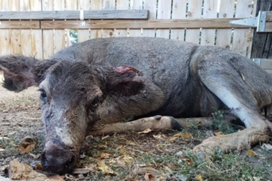 Five Reports of Dogs 'Harassing, Attacking and Mutilating Deer' in Lander Area