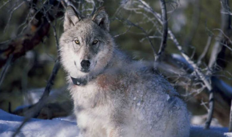 Public Invited to Hunting, Trapping Seasons Meeting with Game and Fish Department