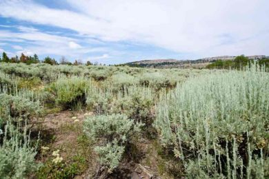 BLM Makes Decision on Wyoming Pipeline Corridor Initiative