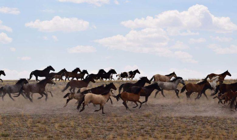 Bureau of Land Management Seeks Public Comment on Wild Horse Assessment
