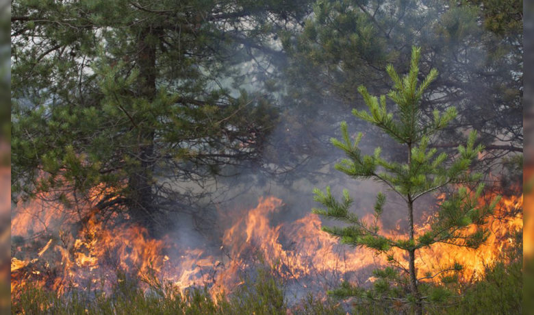 Prescribed Burns Scheduled for Lincoln, Sublette Counties