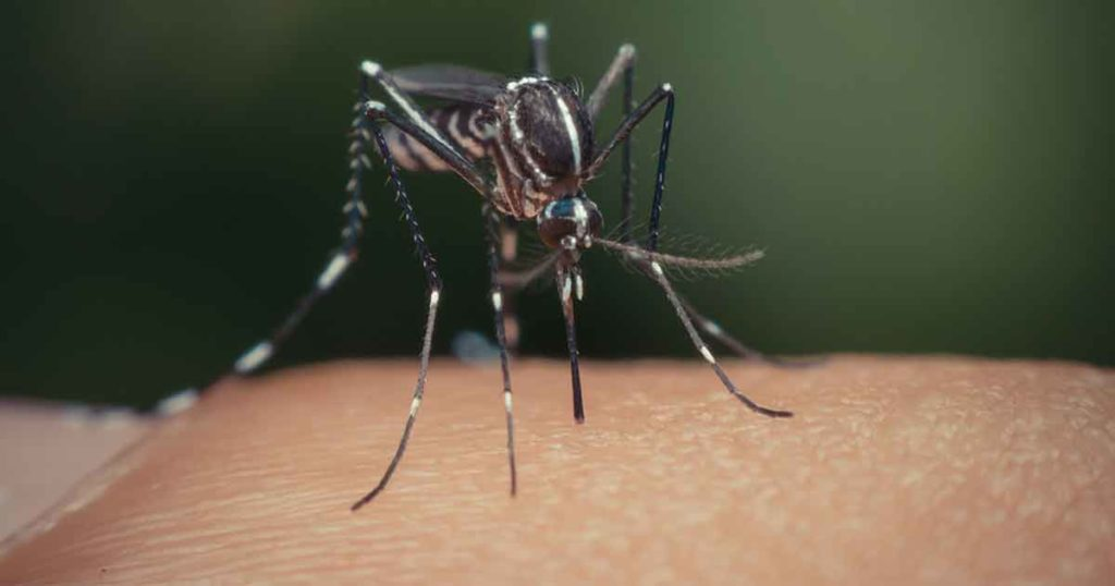 Grant Can Help Pay for Mosquito Control Program