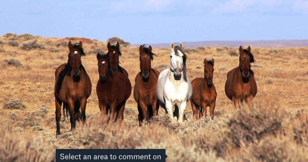 BLM Wild Horse Gathering in Southwest Wyoming has Governor's Support