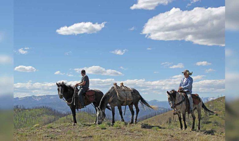 Wild Horse Adoption to Take Place Online