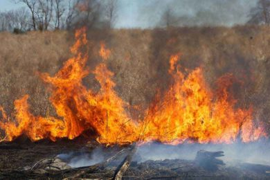 Wyomingites Given Tips on How to Help Prevent Wildfires