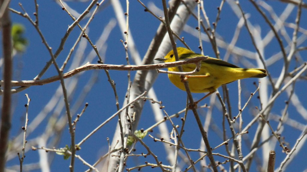 #PHOTOS: Spring Migration Brings Colorful Change to Southwest Wyoming