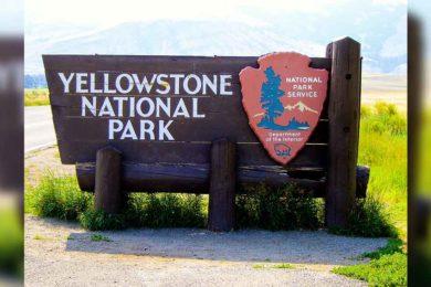 Another Visitation Record Broken at Yellowstone National Park
