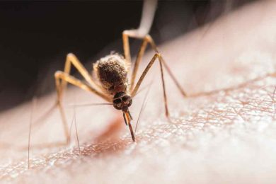 Rock Springs to Begin Mosquito Spraying