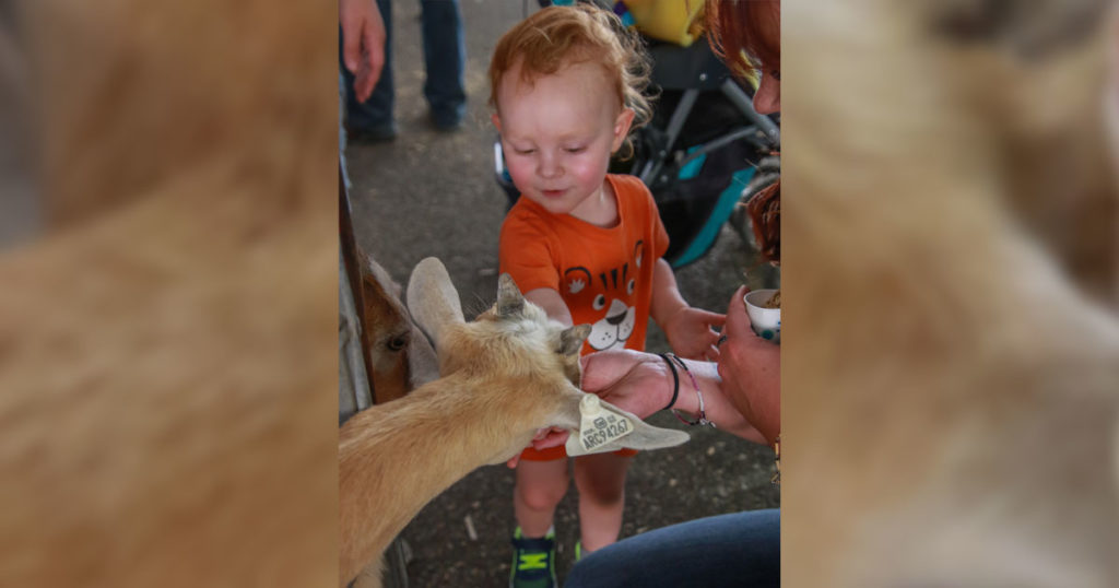 Petting Zoo Always a Family Favorite at Wyoming's Big Show