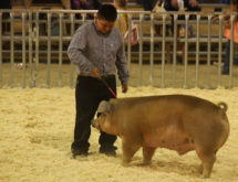 Livestock Auction Reels in Almost $430K at Wyoming's Big Show