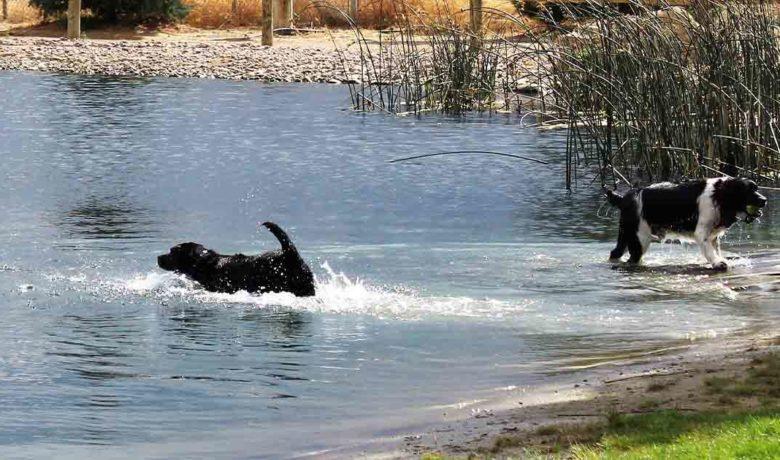 Bitter Creek Bark Park Named Best Park in Wyoming
