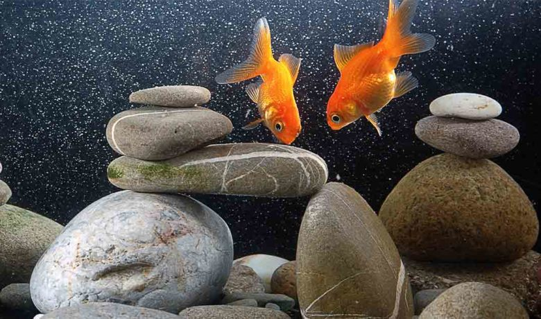 Goldfish Discovered in Rock Springs Ponds Could Cause Problems for Local Fisheries