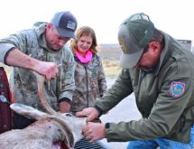 Game and Fish Mandating Game Samples to Study Chronic Wasting Disease