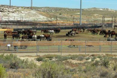 BLM Temporarily Closes RS Holding Facility