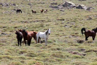 BLM to Start Gathering Wild Horses in Southwest Wyoming