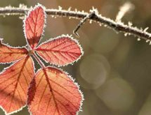 Freeze Watch in Effect for Sweetwater County